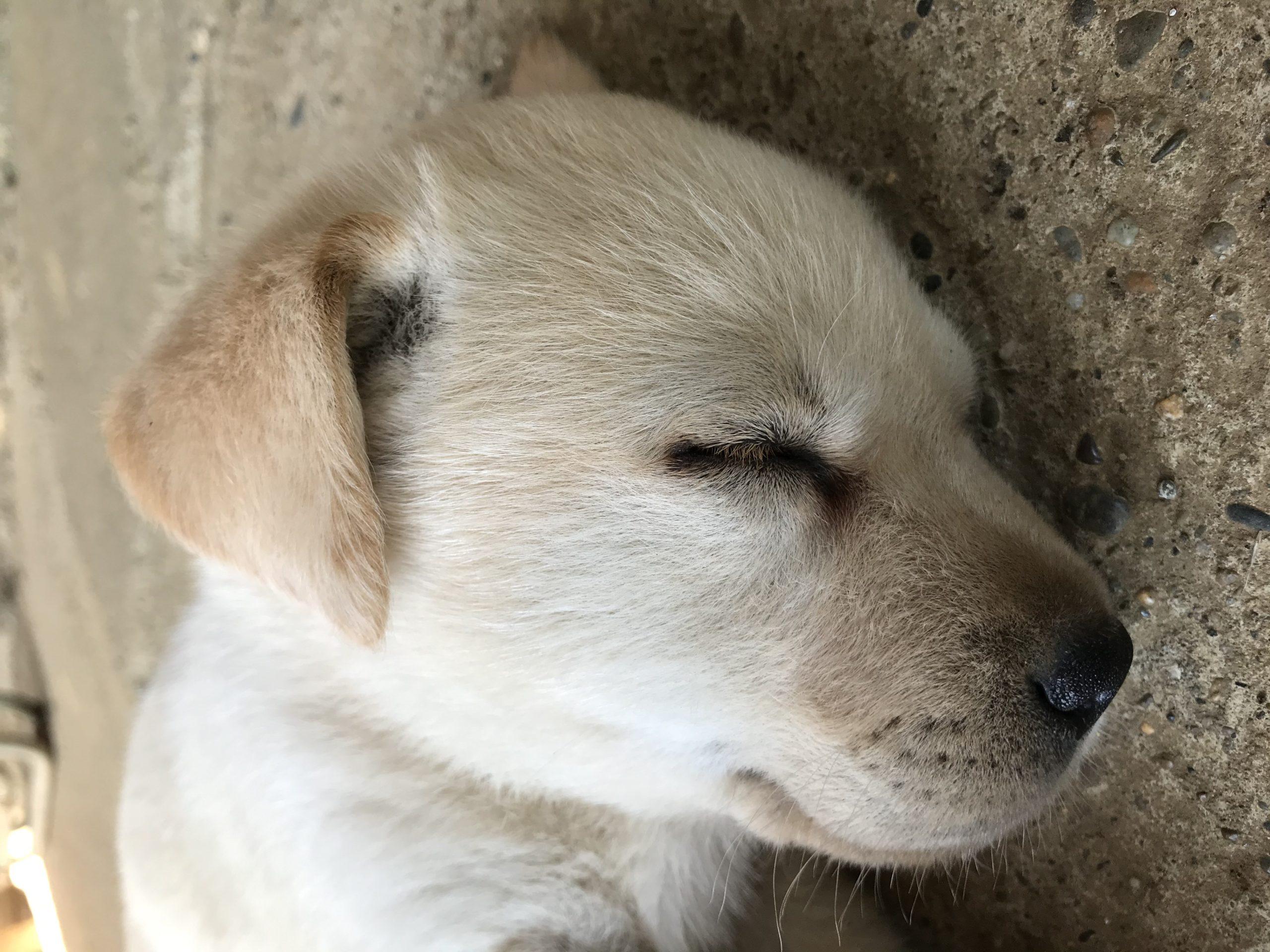 CIMAX番犬
